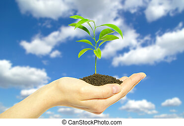 plant in hand - Hands holding sapling in soil  on sky