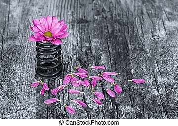 Flower in metal spring with loose petals on grunge wood surface