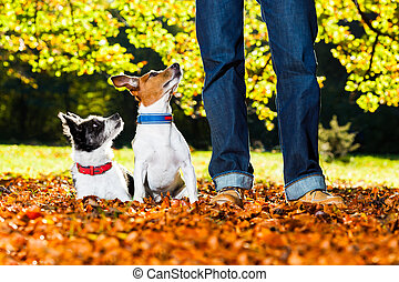 dogs and owner - two happy dogs with owner sitting on grass...