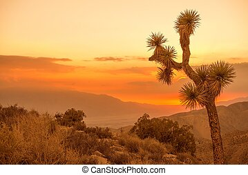 California Desert Scenery at Sunset. Joshua Tree.