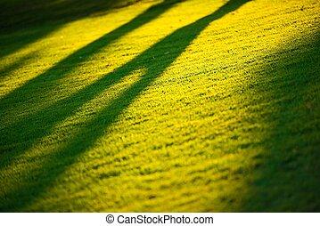 Morning Sun Light. First Sun Rays on the Green Grass Field