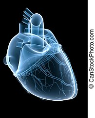 x-ray heart - 3d rendered x-ray illustration of a human...