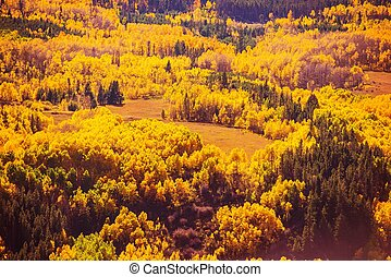 Colorful Fall Forest Scenery. Autumn Foliage in Colorado...