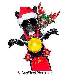 motor bike couple - two christmas dogs on a motorbike riding...