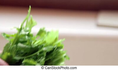 Hand washing fresh cilantro - Fresh green coriander from...