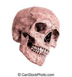 Side view skull