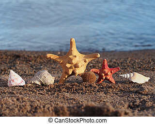 Starfish and seashells on the shore of Lake