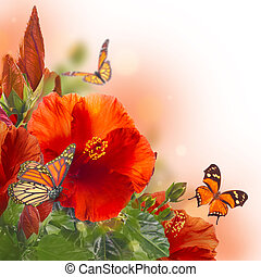 Bunch of red hibiscus and  butterfly
