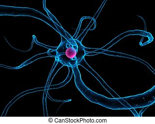 nerve cell - 3d rendered illustration of a human nerve cell