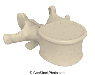 vertebrae - 3d rendered illustration of a vertebrae