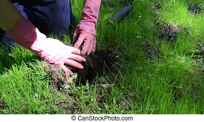 gardener dig earth trap - Gardener with red rubber gloves...