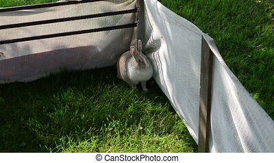 rabbit woman caress - Cute rabbit in yard on grass and woman...