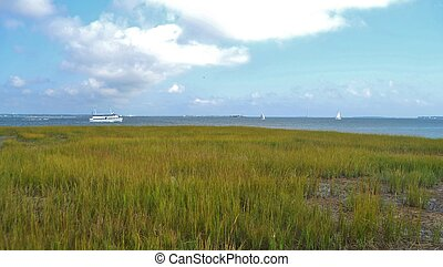 Marsh by the Waterfront