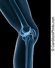 skeletal knee - 3d rendered illustration of a human skeletal...
