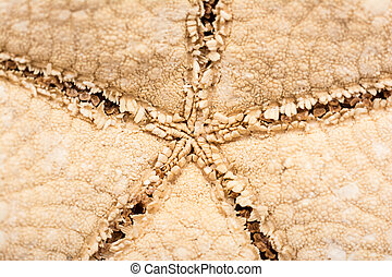 Sea Star Close Up