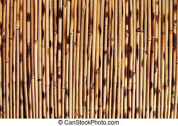 bambu,