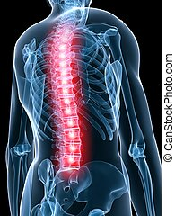 painful spine - 3d rendered illustration of a transparent...