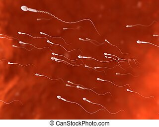 human sperm - 3d rendered illustration of sperms