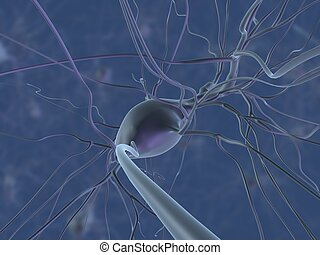 nerve cell - 3d rendered close up of an isolated nerve cell