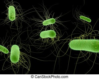 ecoli bacterium - 3d rendered illustration of some isolated...