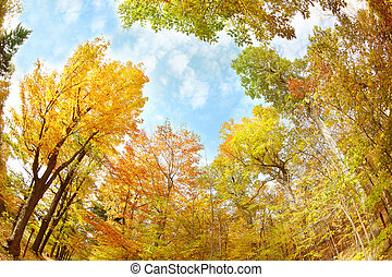 Yellow autumn trees in the park