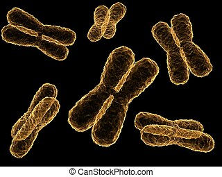 x-chromosome - 3d rendered illustration of isolated...