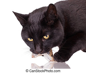 Black cat with his prey, a dead mouse