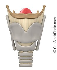 larynx anatomy - 3d rendered anatomy illustration of human...
