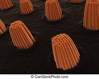 ear cells - 3d rendered close up of some ear cells