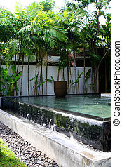 Water garden - Tropical water garden.