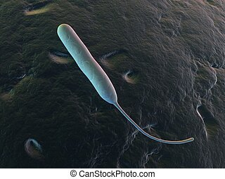 campylobacter jejuni - 3d rendered illustration of an...