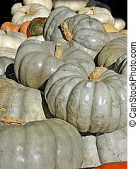 White pumpkins - A stack of white pumpkins for the Fall...