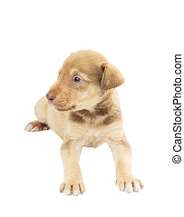 cute puppy mutts lying on white background