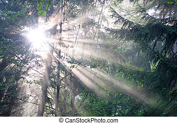 Morning in the wood with sun beam