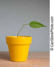 Plant with one leaf - young plant with one leaf in clay pot