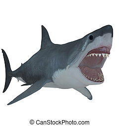 Great White Open Jaws - The Great White Shark is the largest...