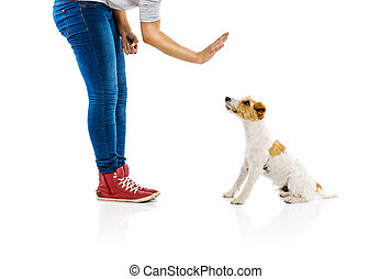 Woman training dog isolated - Young woman training cute...