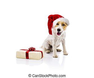 Dog sitting in santa hat next to gift isolated - An adorable...