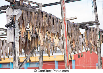 Greenland halibut drying on a wooden rack in Ilulissat