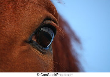 Close up of brown horse eye - Close up of wise brown horse...
