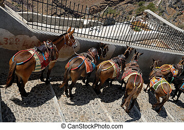 Saddled mules or donkeys waiting for tourists to carry up or...