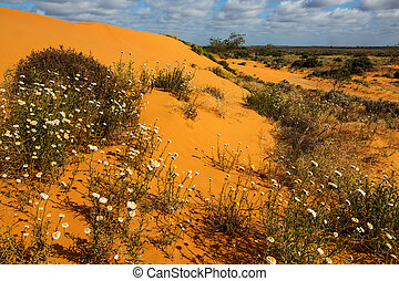 Perry Sandhills near Wentworth - Sand dunes near the New...