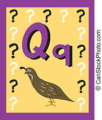 Flashcard Alphabet - Flash Card Letter Q nouns. There is one...