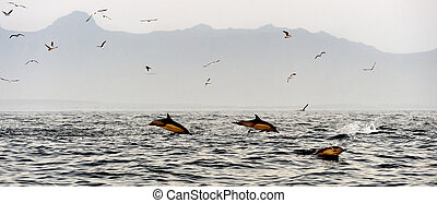 Jumping dolphins - The jumping dolphins comes up from water...