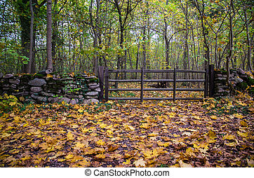 Old wooden gate at autumn - Old wooden gate in a forest with...
