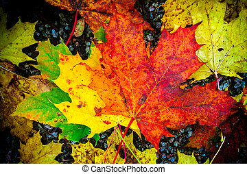 Fall colored foilage leaves on ground