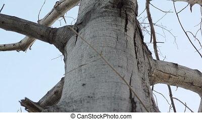 Dead Tree Tilt Up