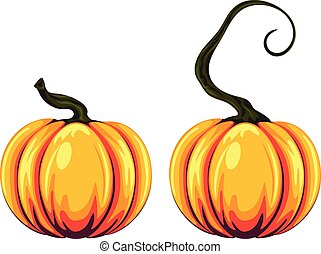 Pumpkin Illustration - Detailed two pumpkins illustration on...