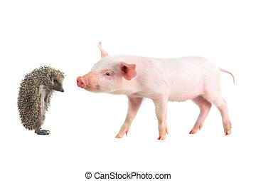pig and hedgehog on a white background studio