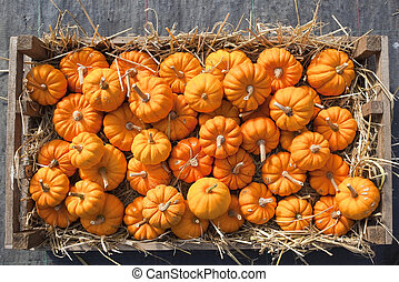 minature pumpkins - mini pumpkins in a straw filled wooden...